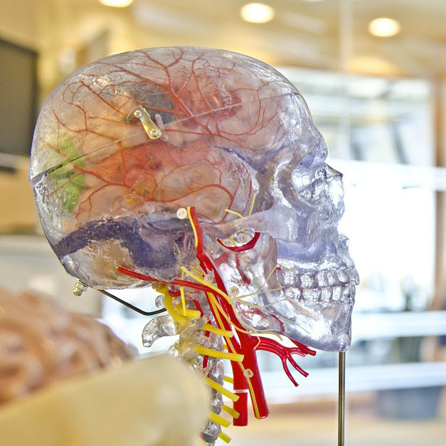 neurologia ascoli piceno